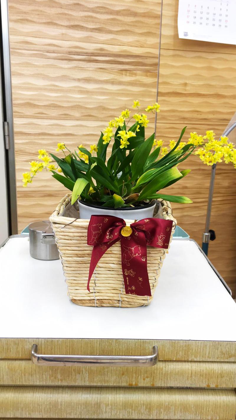 """2年前にいただいた""""蘭""""の種類のお花が今年も満開になってくれました!一つの花が1cm位の小さなものですが、窓辺でかわいらしく咲いています。よしだ歯科医院(歯医者)は青森県初!『光と水の最新治療システム(除菌水とプラズマレーザー治療)』を導入。一般歯科(歯周病・虫歯治療など)・矯正歯科・小児歯科(こども歯科)・かみ合わせ・ドライマウス・口腔機能訓練・ホワイトニング・審美歯科・PMTC・顎関節を考慮した歯列矯正・予防歯科はもちろんのこと、全身的な観点からも皆さんの歯・口腔に関する健康をサポート"""